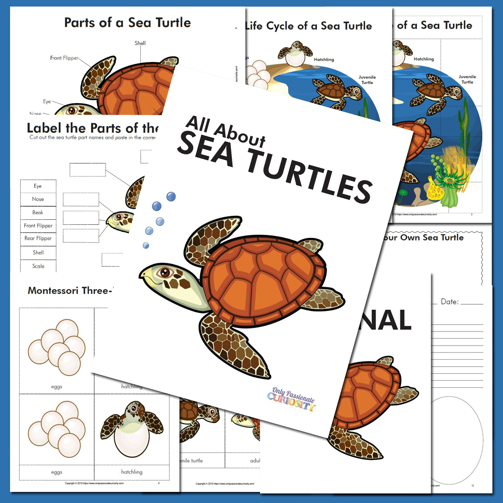 sea turtle life cycle unit study