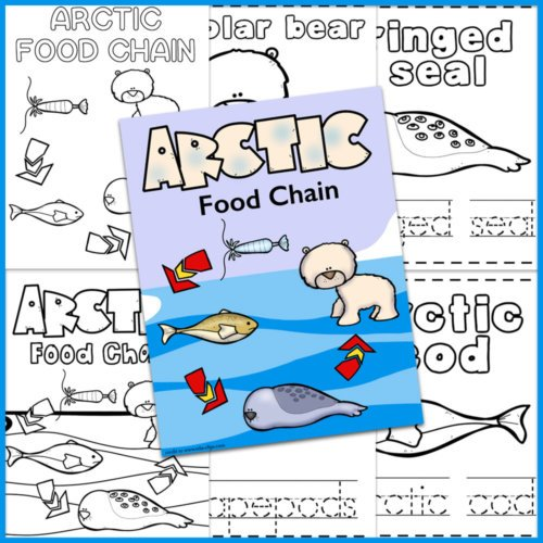 Arctic Food Chain examples and cover page
