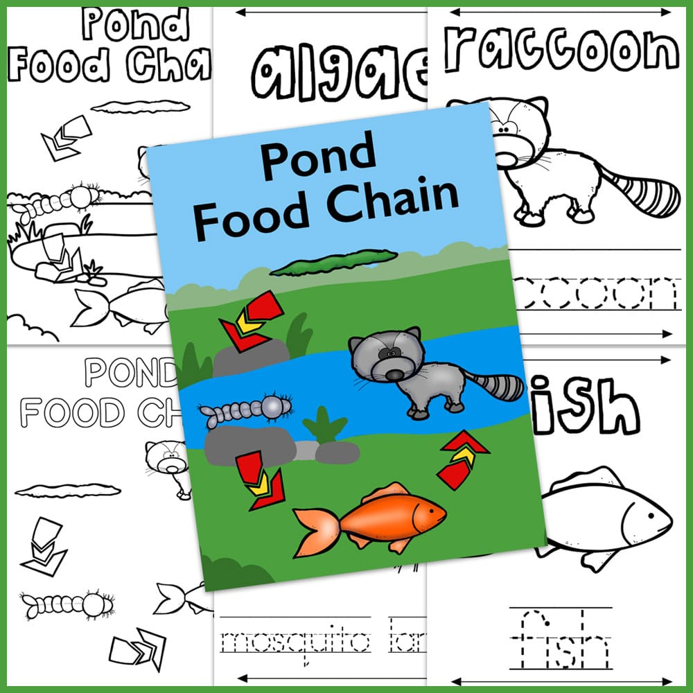pond food chain coloring pages
